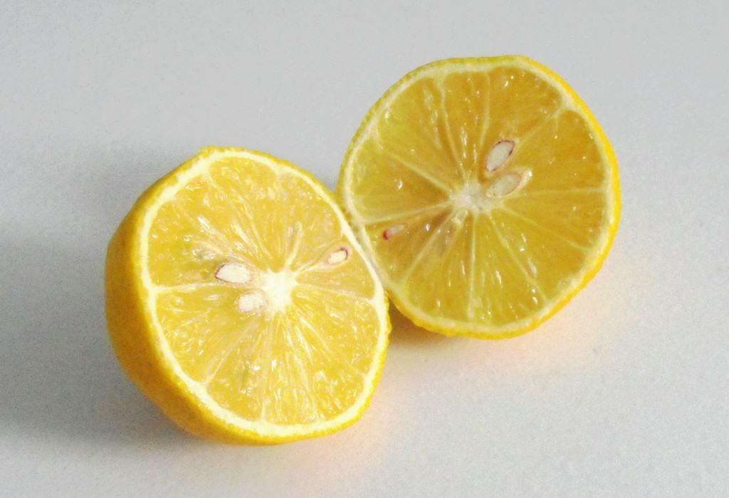 Indoor Fruit Tree- Your Guide to Indoor Citrus