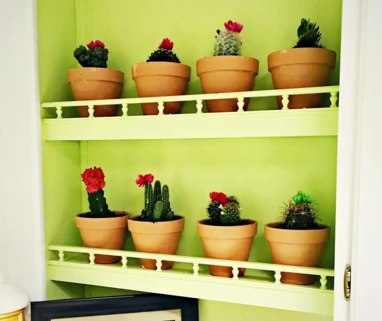 repot a cactus