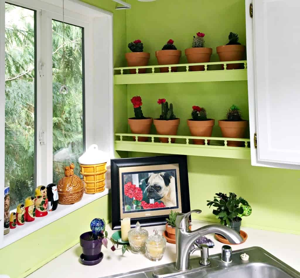 cactus on shelf in kitchen