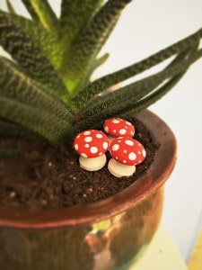tiny toadstools in potted plant