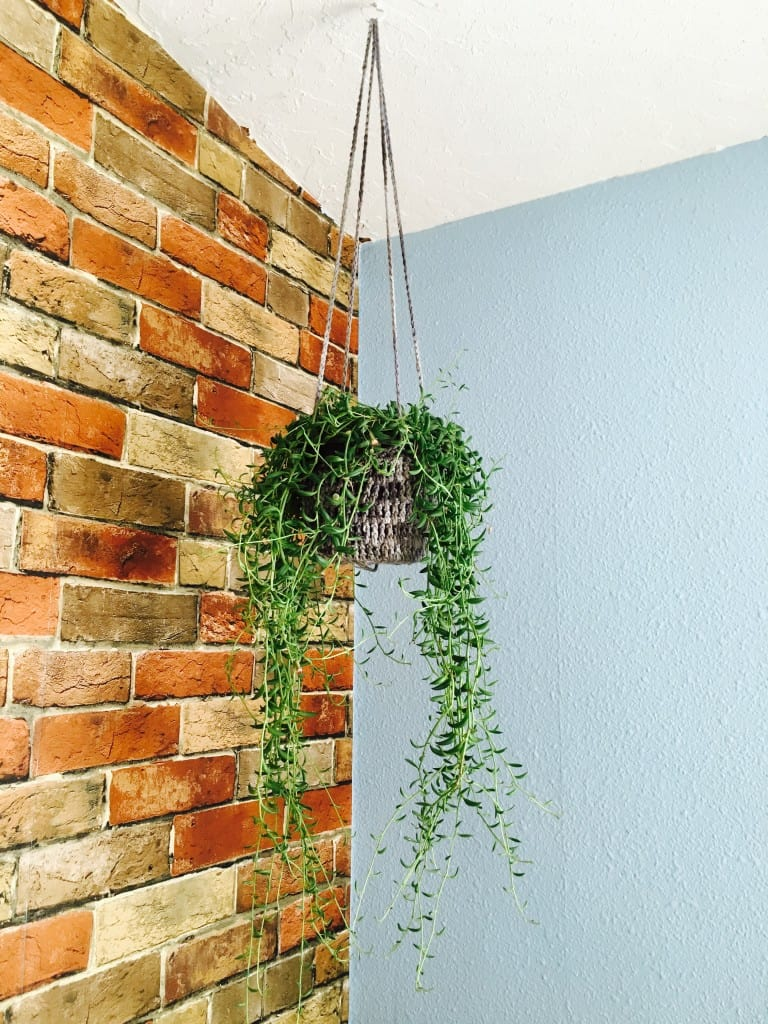 crochet plant hanger hanging from ceiling in front of bring wall
