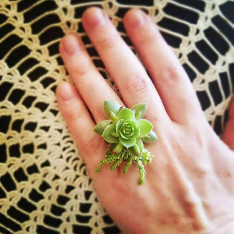 green succulent ring