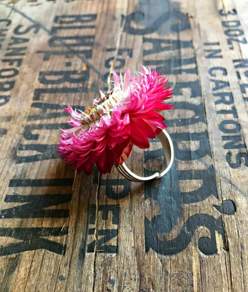 straw flower ring 1