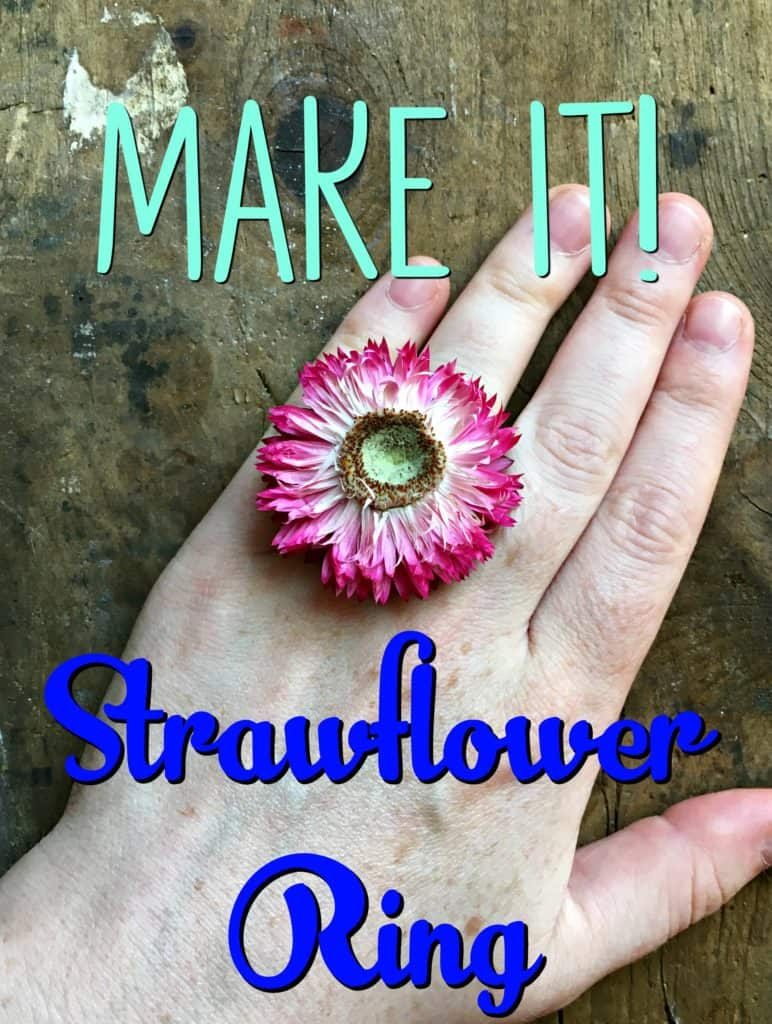 strawflower ring 4