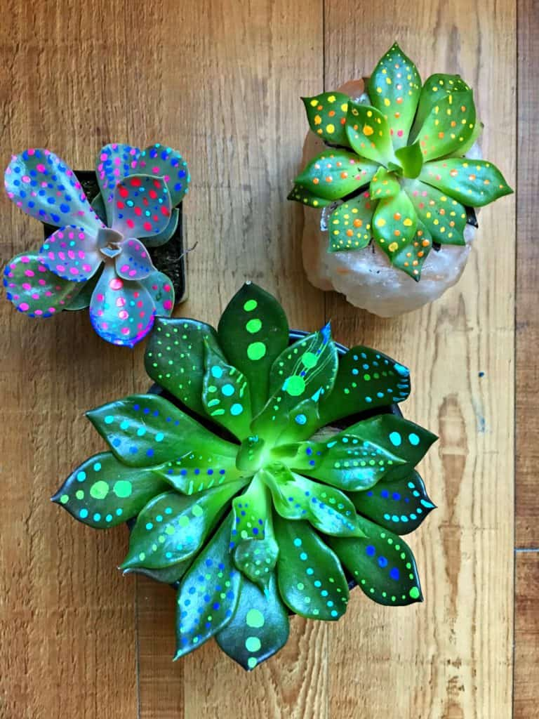 three succulents with dots of paint on them on a wood table