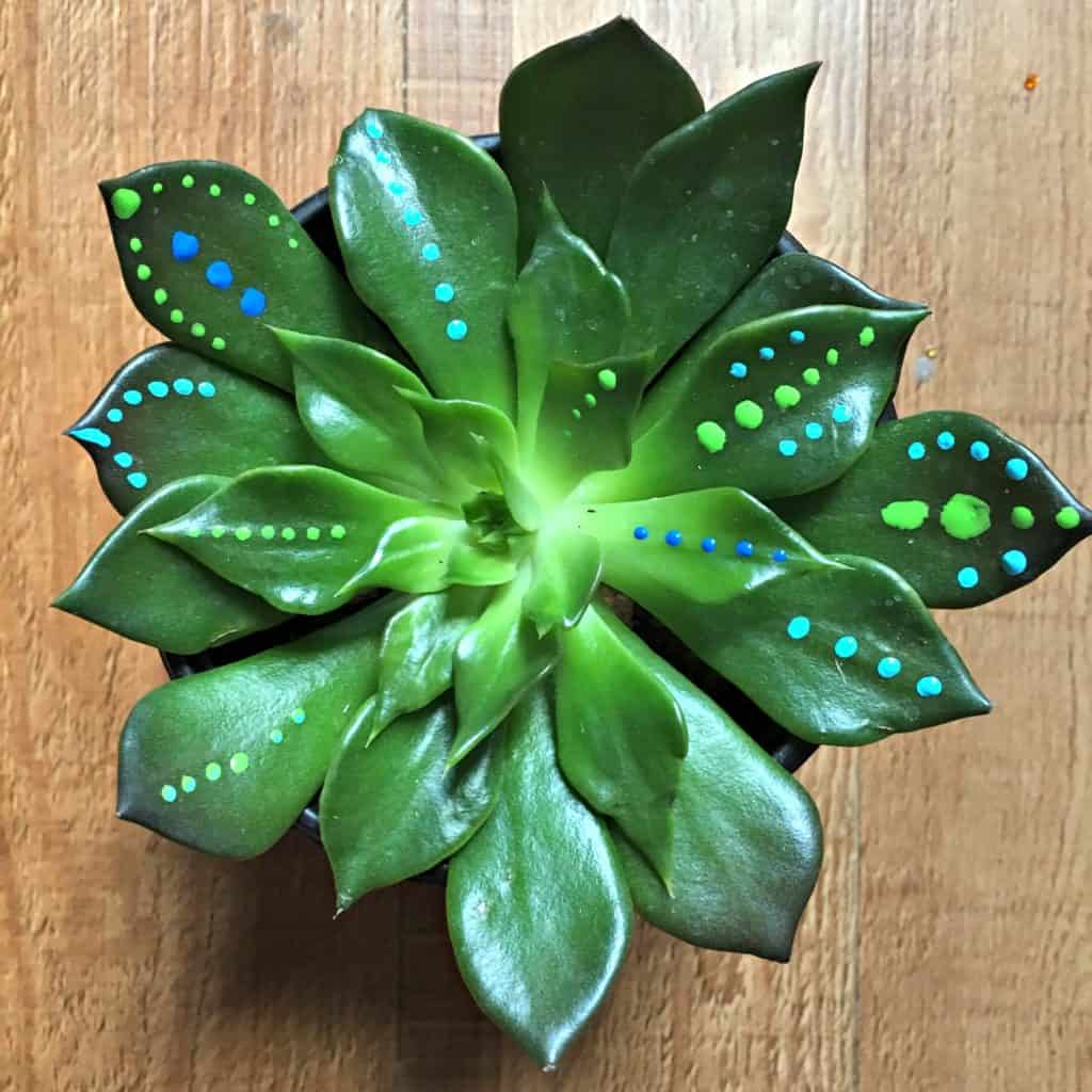 succulent with a few dots of paint on it