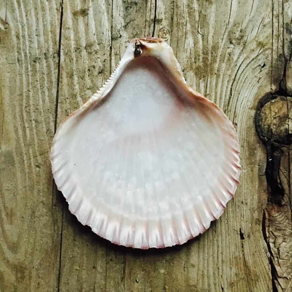 drill a hole in a seashell