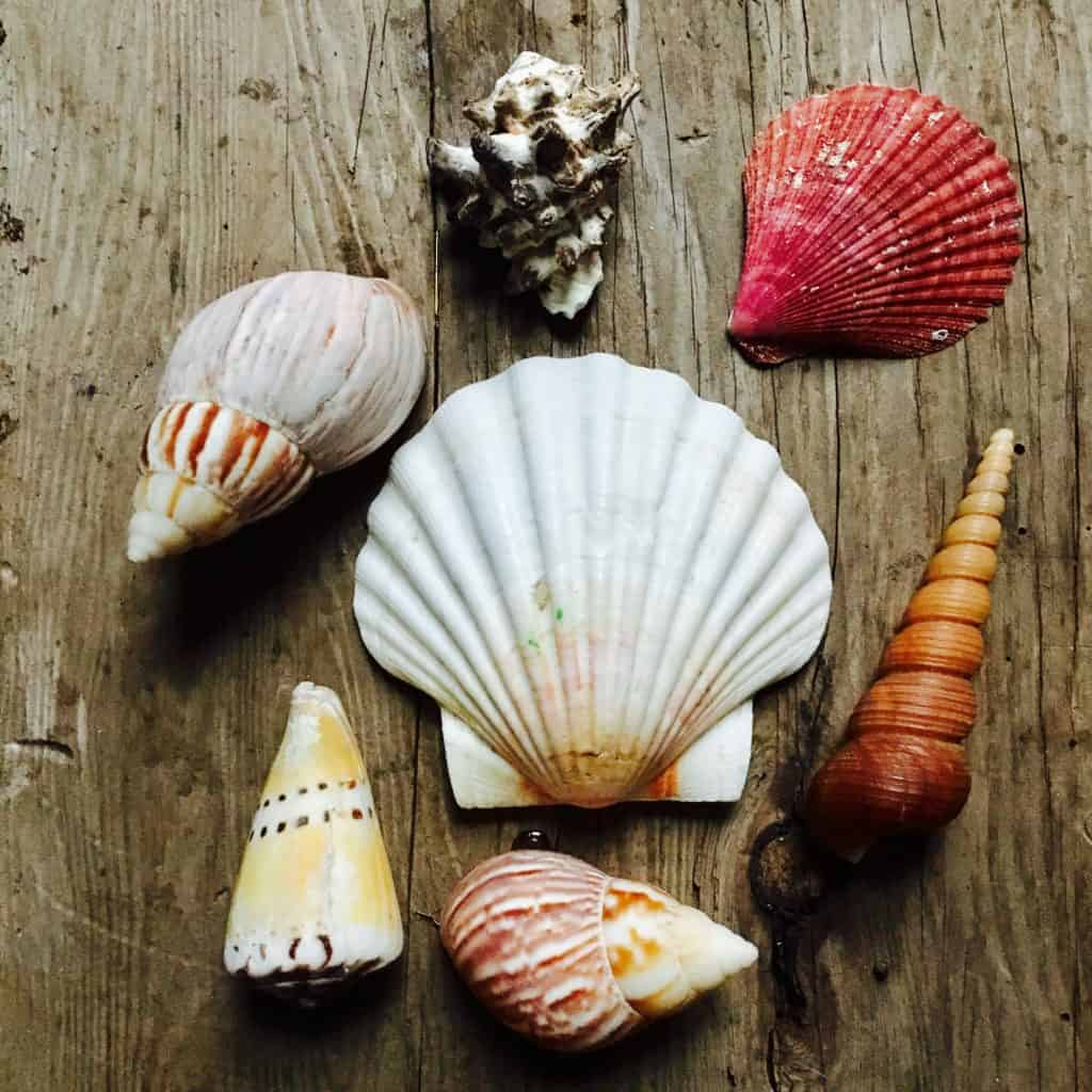 How To Drill A Hole In A Seashell Crafty Little Gnome