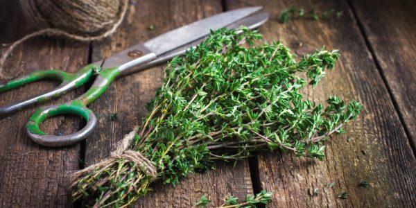 10 Best Herbs to Grow Year Round
