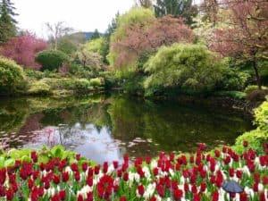 outdoor pond area in garden