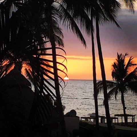 sunset mexican beach palm tree silhouette