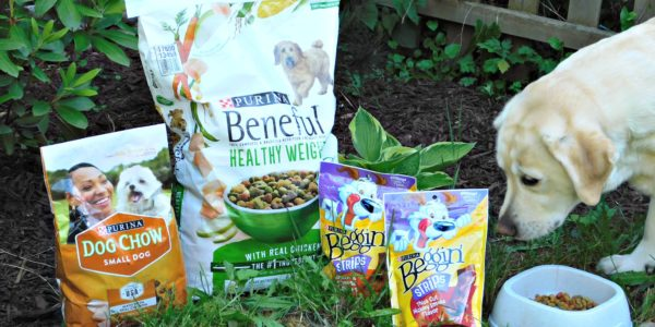 purina products for dogs