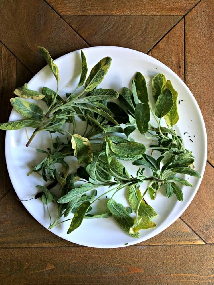 fresh sage on a white plate