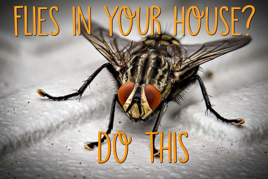flies in my house all of a sudden