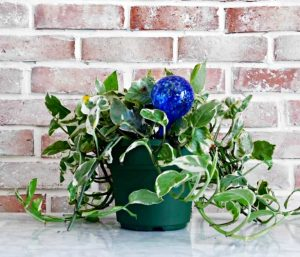 houseplant with water bulb on white counter and brick background