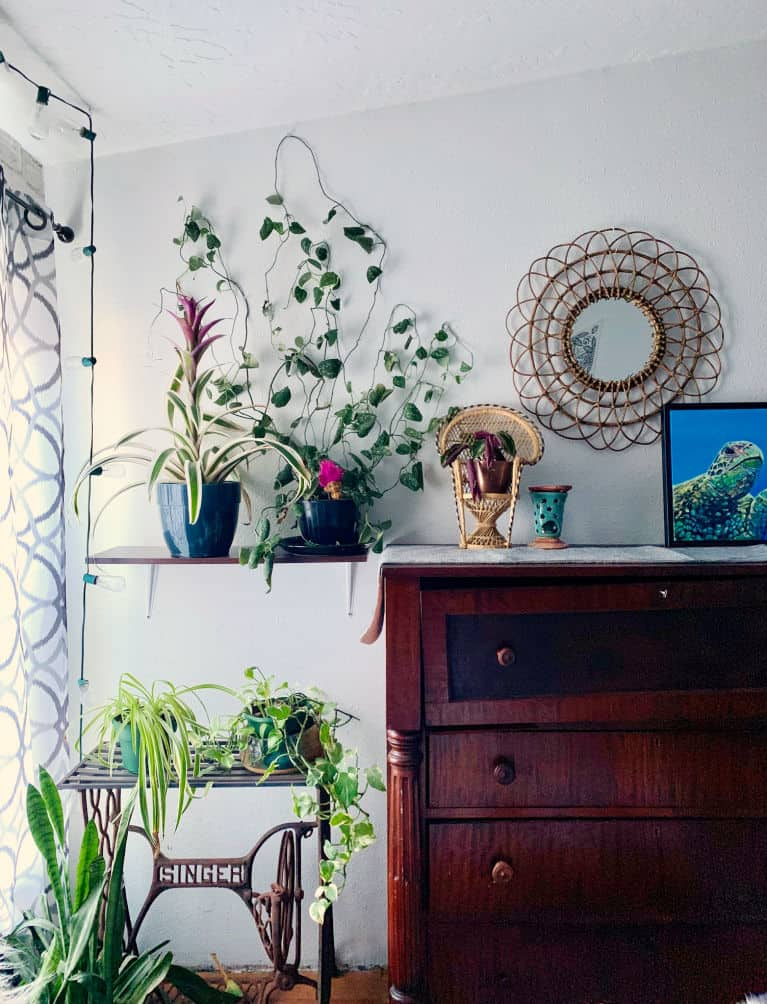 Antique chest next to green houseplants