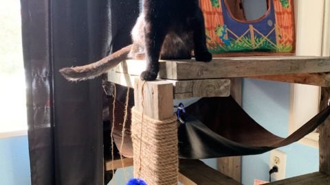 DIY cat hammock and cat scratch pad