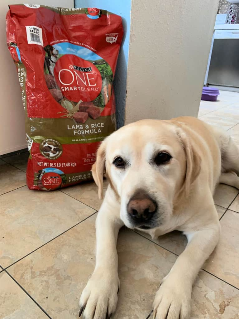 dog and purina dog food