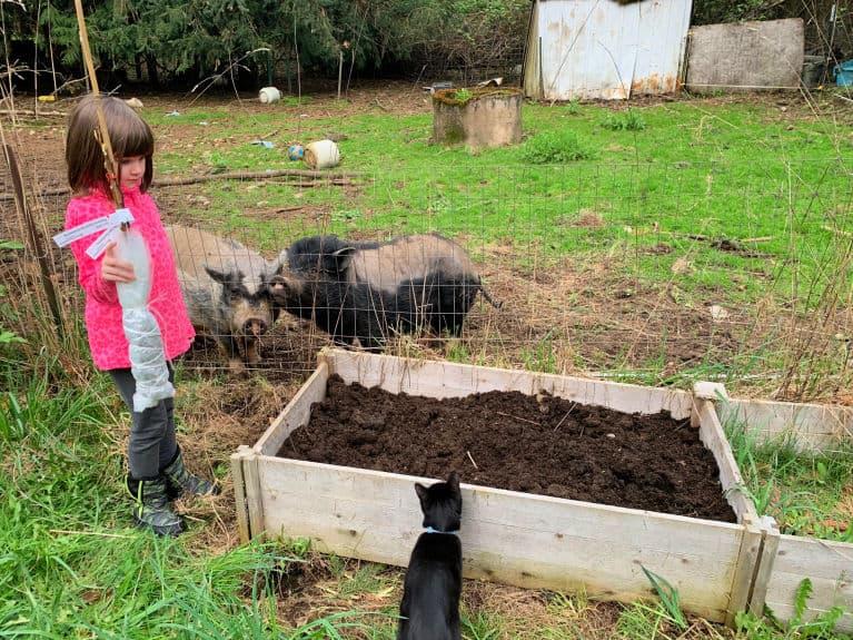 child planting raspberry bush in the backyard