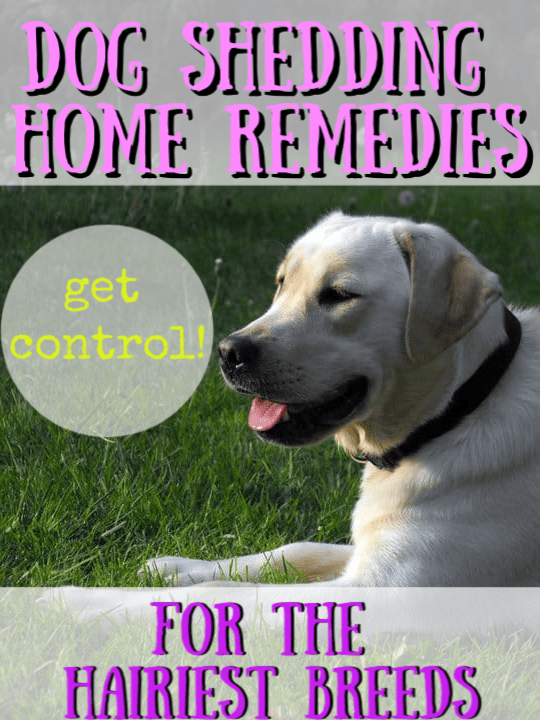 Dog shedding home remedies graphic