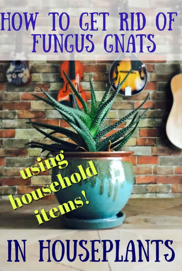 How To Get Rid Of Fungus Gnats In Your Houseplants