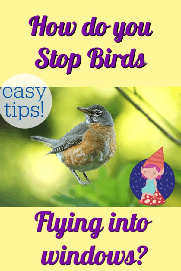 birds pecking at windows