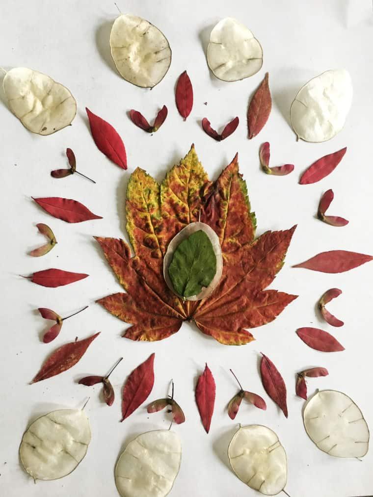 leaves arranged in a mandala