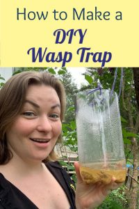 diy wasp trap