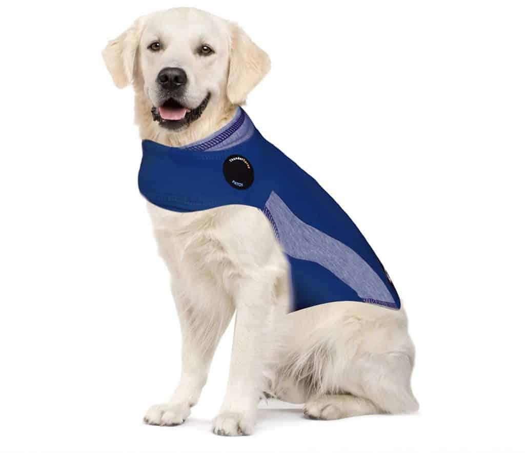 Dog in a thundershirt.